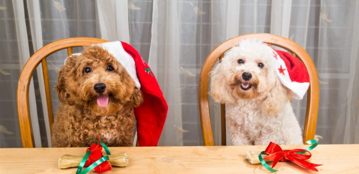 Don't let your pet pack on the holiday pounds