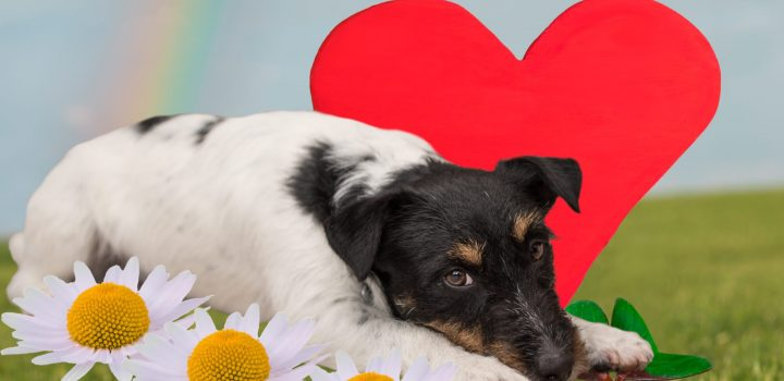 It's almost spring! Time to check for heartworm disease!